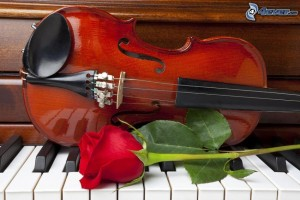 violon,-rose-rouge,-piano-219257