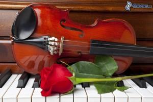 violon,-rose-rouge,-piano-219257